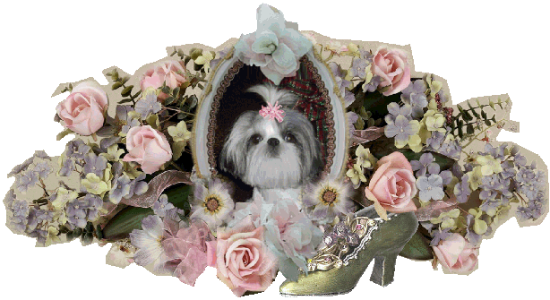 Teacup Shih Tzu Breeder Puppies For Sale In California Victorian